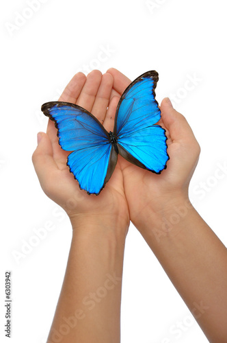 Deurstickers Vlinder Hands holding a blue butterfly against a white background