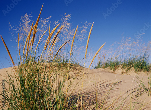 Foto op Plexiglas Grote meren Dune Grass Blows in the Wind on Lake Michigan