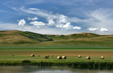Prairie landscape of Canada. Pastures and meadows of Alberta. poster
