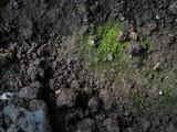 bryophytes and soil poster
