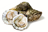 fresh alive oysters on a white background poster