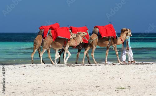 Fotobehang Tunesië djerbas kamele