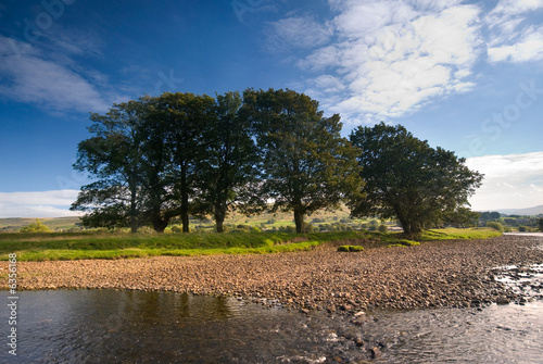 Group of trees on the banks of the River Ure near Hawes