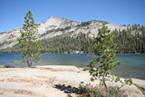 Ellery Lake in Yosemite Park