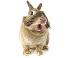 Fototapety Rabbit in smile