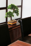 bonsai on a window sill at the Japanese restaurant poster