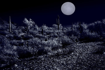 Moonlight Desert