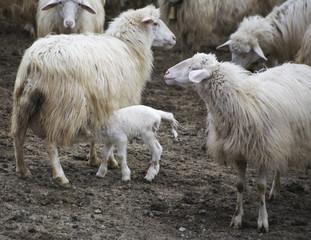 famiglia animale