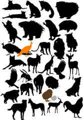 Vector animals collection