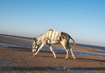 Running on a coast of the red sea a donkey