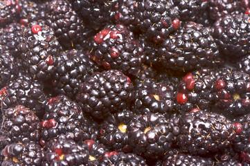 Macro Blackberries with Water Drops