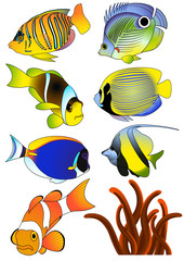 Exotic fish, vector illustartion