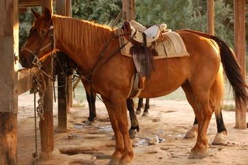 cheval pret au depart