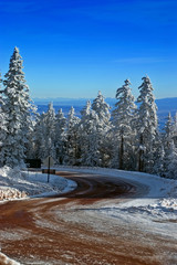 Pine Trees and road in Winter with Snow