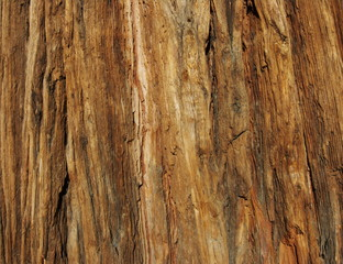 incense cedar bark macro