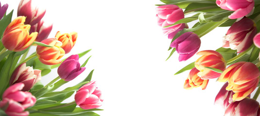 floral tulip border isolated on white