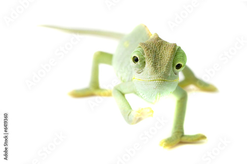 Foto op Aluminium Kameleon Chameleon. Isolation on white.