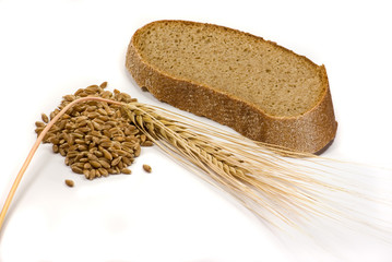 Barley grain, ear and piece of bread