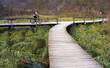 cycling over wooden bridge