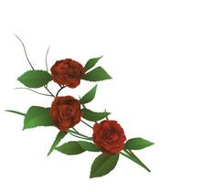 Ilustracja - oddział czerwona róża winorośl jak ikebana