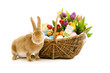 Rabbit with basket of easter eggs and spring flowers