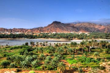 Oasis in the desert of Oman (near Muscat)