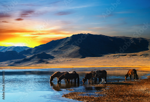 Herd of horses in mongolian wilderness