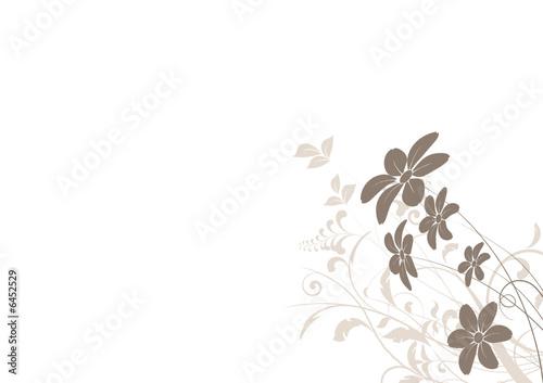 vecteur série - marguerite - fleur vectoriel sur fond blanc