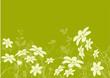 vecteur série - marguerite - fleur vectoriel sur fond vert