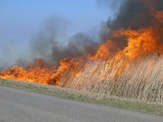 fire near road