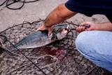 Fishing in Tampa, Florida poster