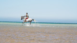 The Arabian stallion bathes in the red sea poster