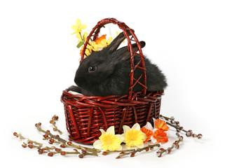 Black rabbit basket