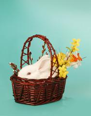 Rabbit in baske