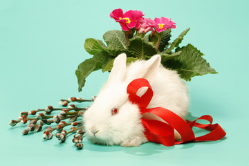 Rabbit albino