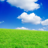 Green spring field and beautiful white fluffy clouds. poster