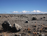 Old lava field on Big island, Hawaii poster