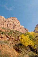 Fall season foliage in Zion National Park
