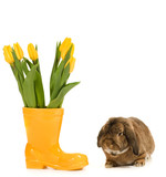 Rabbit and vase with fresh tulips on white background