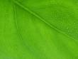 Leinwanddruck Bild Leafrain