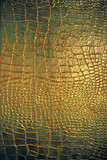 Reptile leather texture - Fine Art prints