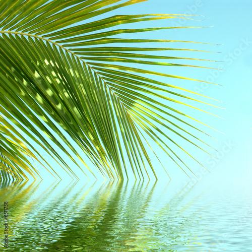 palme au bord de l'eau