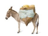 donkey carrying supplies