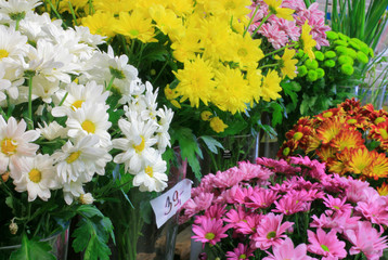 florist shop -chrysanthemum 1