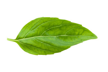 fresh basil leaf isolated