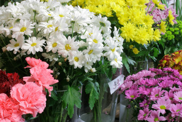 florist shop -chrysanthemum