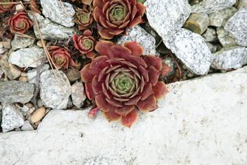 succulente sammlung-Zurigo/Zürich-CH