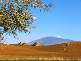 olive branch with fruit on the background of the volcano Etna poster