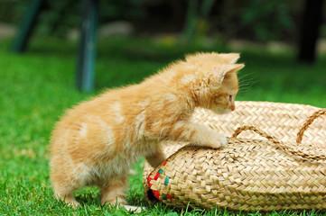 Katzenjunges, Kater