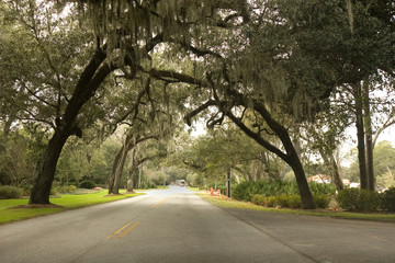 Road Through the Oaks
